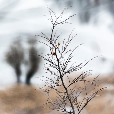 Osservando il silenzio | Rossella Brandolin