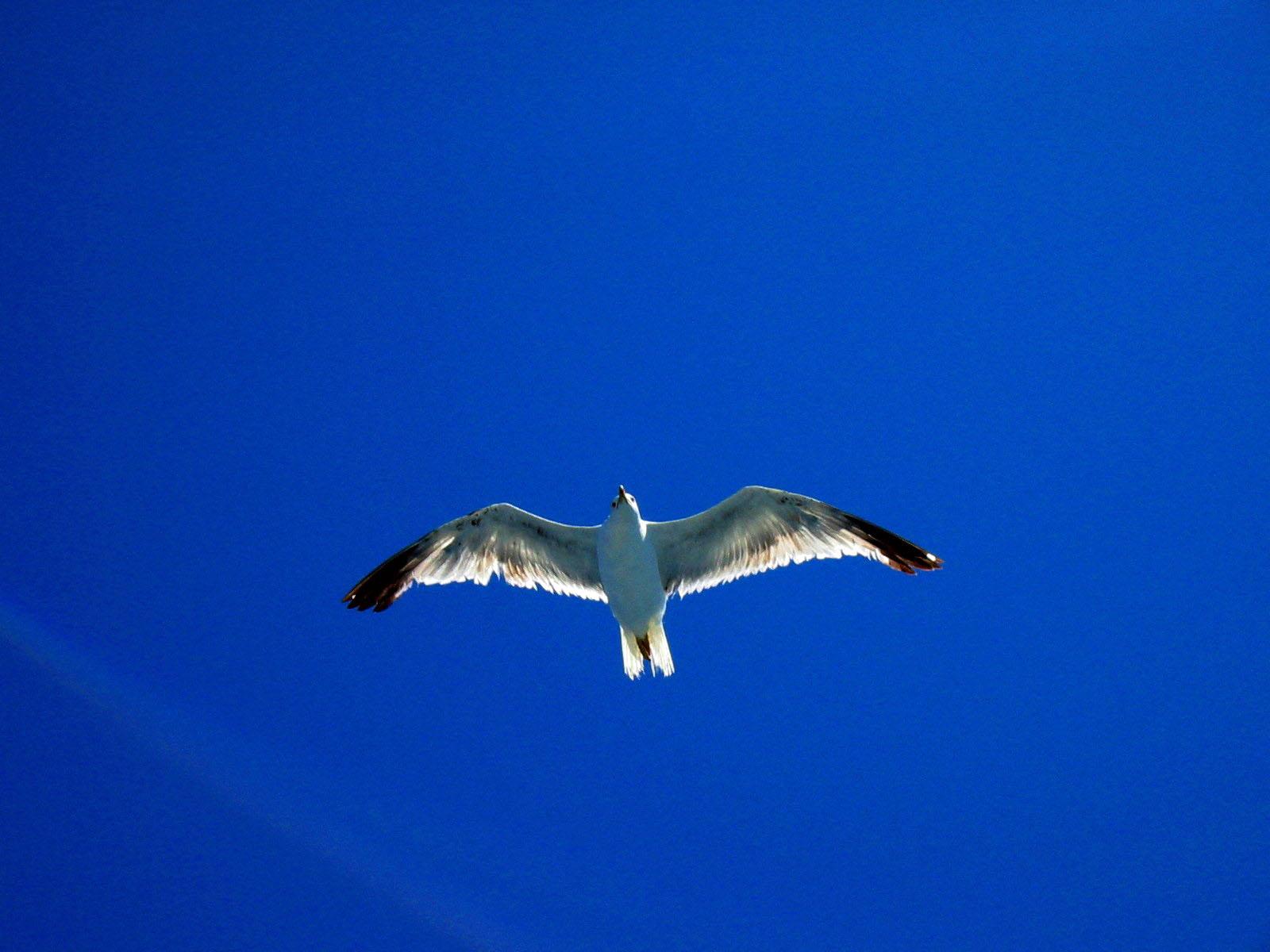 Il Cielo - Libertà di volare