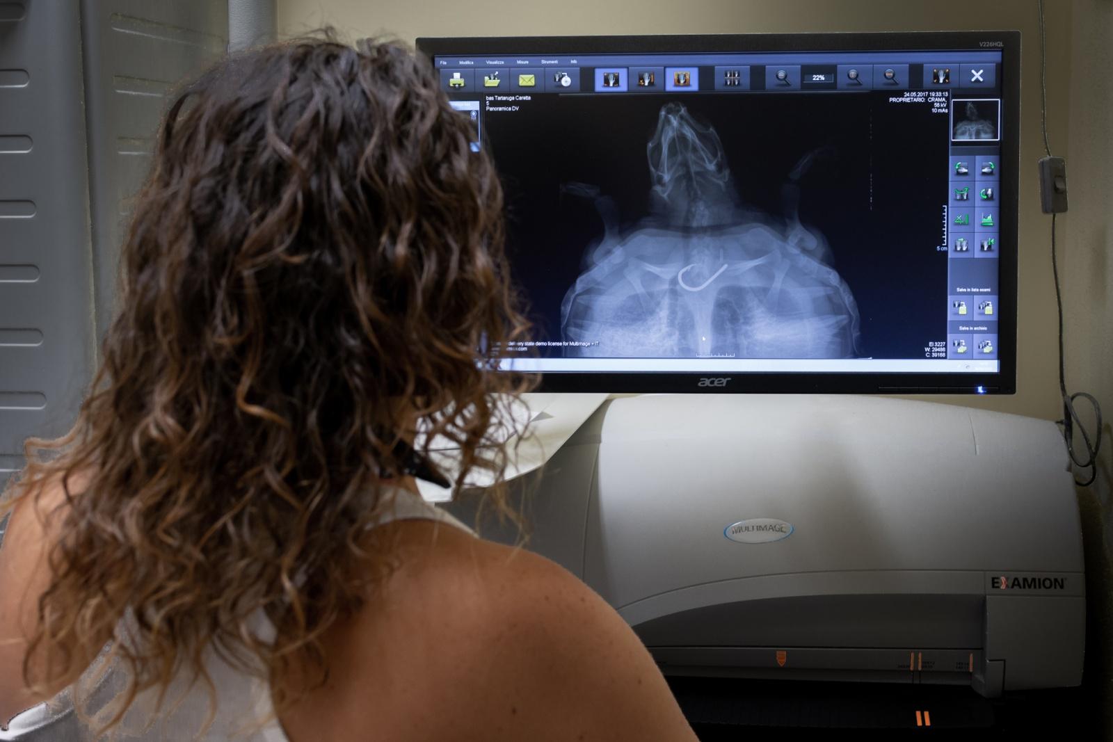 Donatella, biologa marina e socia del centro CRAMA, osserva la radiografia di una tartaruga che ha ingerito un amo da pesca. © Andrea Puxeddu.