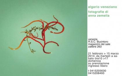algario veneziano