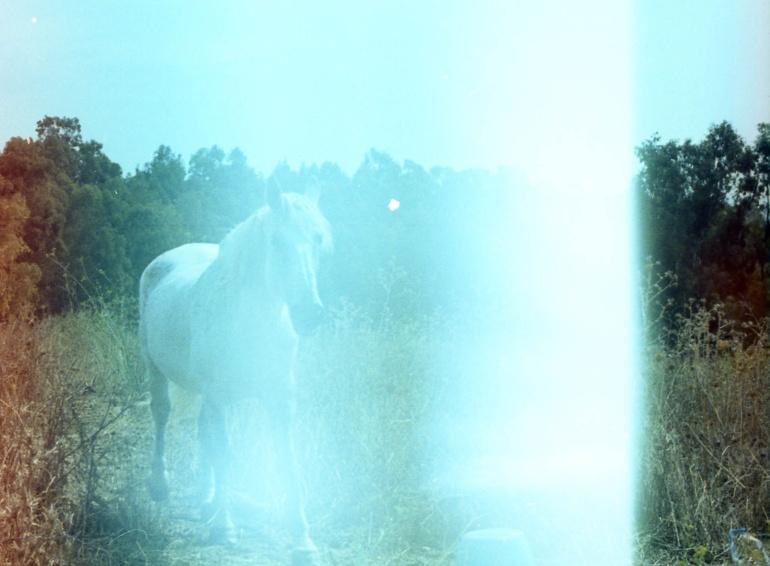 Un cavallo bianco attraversa la strada, Scansione da pellicola a colori, Sicilia, 2011. © Anna Pizzoccaro.