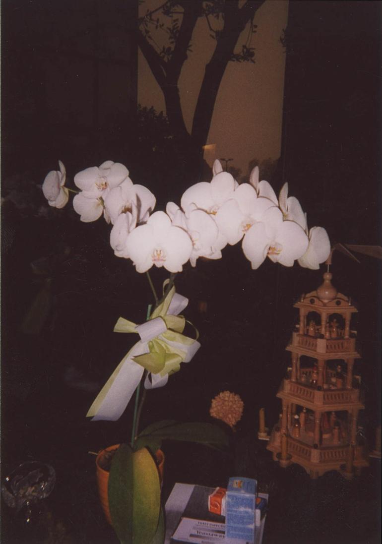 Orchidee nell'ufficio di mia madre, Milano, 1995. © Anna Pizzoccaro.